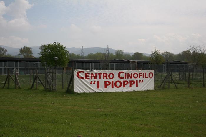 """Esposizione amatoriale e Gara di addestramento oggi al Cento Cinofilo """"I Pioppi"""""""