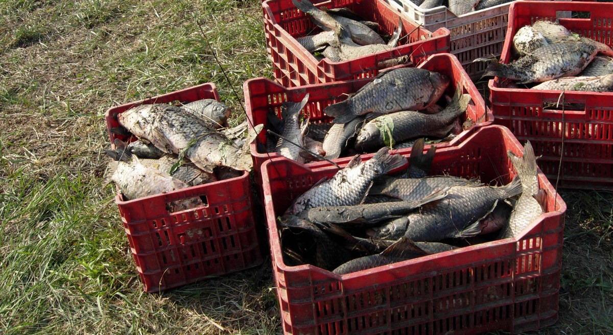 Ottima quest'anno la riproduzione dei pesci a Corbara
